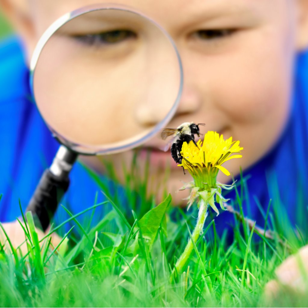 Little Boy With Magnifying Glass And Bee Picture Id168583129 2